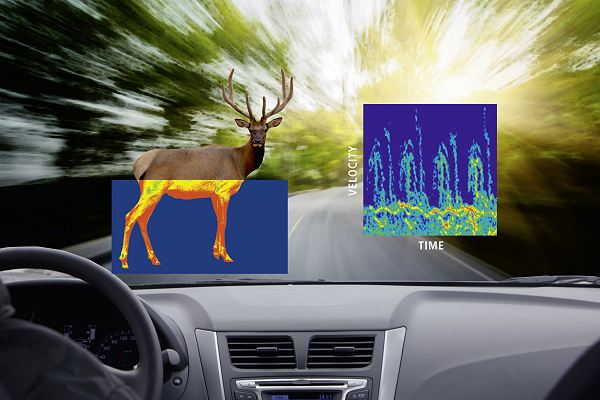 Intelligent road safety animal detector